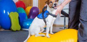 Fisioterapia na Saúde dos Animais